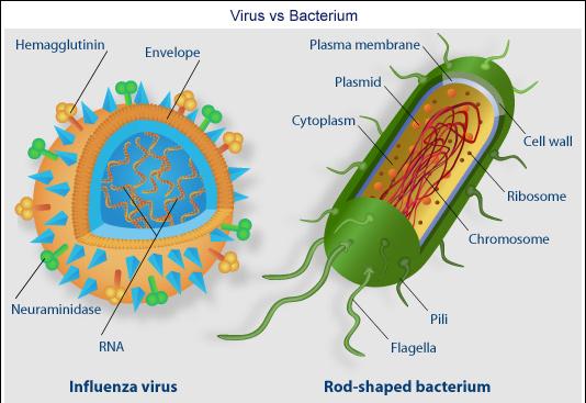 virus-bact