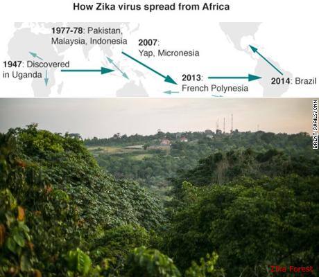zika-forest