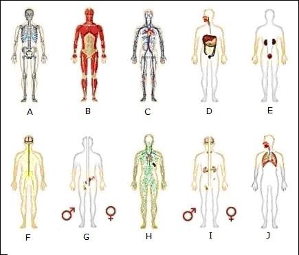 Humanbody System