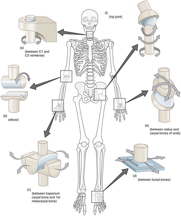 human-joints