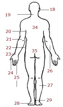 body-3b